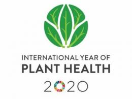 International Year of Plant Health Logo